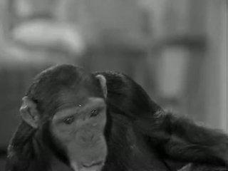 Tarzans 新しい york adventure (1942)
