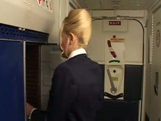 منتظم, stewardess