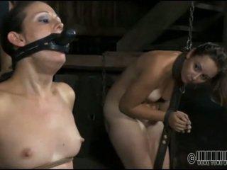 Sclav gets ardous a bate