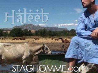 Haleeb (milk)